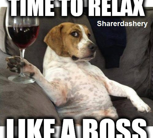 Dogs Relaxing Like a Boss